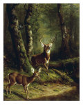 Buck and Doe in the Adirondacks Giclee Print by Arthur Fitzwilliam Tait
