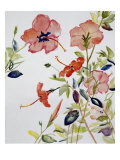Hibiscus Flowerpiece Giclee Print by Sir Roy Calne