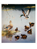 Mallards Giclee Print by Edward Matthew Ward