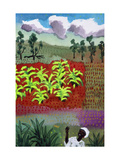 Banana Fields, Kenya Giclee Print by John Newcomb