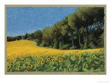 Sunflowers in Perugia Giclée-Druck von Helen J. Vaughn
