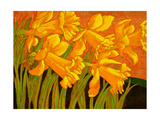 Big Daffodils Reproduction proc&#233;d&#233; gicl&#233;e par John Newcomb