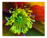 Flower Fantasy Photographic Print by Gary M. Curtis