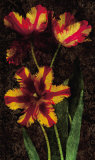 Decorative Tulips I Prints by John Seba