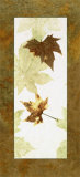 Falling Leaves I Prints by Phillip Jaeger