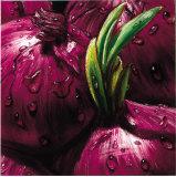 Onions Prints by  Alma'ch