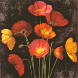 Poppy Bouquet I Prints by John Seba