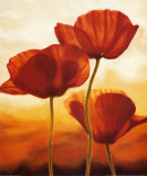 Poppies in Sunlight I Kunst af Andrea Kahn