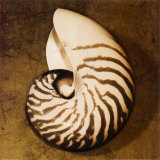 Nautilus Prints by Caroline Kelly