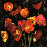 Poppy Bouquet II Posters by John Seba
