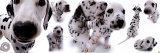 Dalmatians Prints
