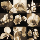 Orchid Bouquet Poster by Caroline Kelly