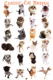 Cat Breeds Poster