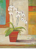 Coral Orchid Print by Claire Lerner