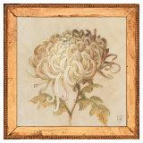 Chrysanthemum Floret Poster by Lauren Hamilton