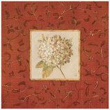 Hydrangea Floret Prints by Lauren Hamilton