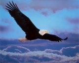 Adler Kunstdruck