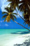 Tropisk strand Plakater