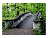 A Bridge in the Park Photographic Print by Stasys Eidiejus