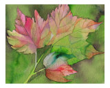Napa Fall Giclee Print by Mark Weerda