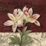 Kelly Donovan - Postcard Lily Plakát