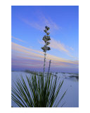 White Sands Morning Photographic Print by David Cramer