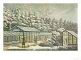 Forcing Garden in Winter Giclee Print by Humphry Repton
