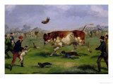 Bull Baiting Giclee Print by Samuel Henry Alken