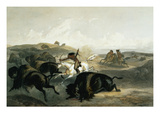 Indians Hunting the Bison, Plate 31 from Volume 2 of 'Travels in the Interior of North America' Giclee Print by Karl Bodmer