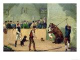 Bear Baiting Giclee Print by Samuel Henry Alken