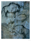 Injured Bison, Rock Painting, Prehistoric Giclee Print