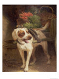 The Grocer's Dog Giclee Print by Henriette Ronner-Knip