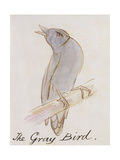 "The Gray Bird, from ""Sixteen Drawings of Comic Birds"" Premium Giclee Print by Edward Lear"