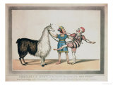 Grimaldi and the Alpaca, in the Popular Pantomime of the Red Dwarf, Published 1813 in London Giclee Print by John Norman