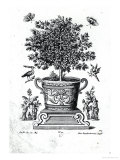 Ornamental Tree in an Urn on a Small Stage Giclee Print by Martin Engelbrecht