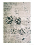 Five Views of a Foetus in the Womb, Facsimile Copy Premium Giclee Print by  Leonardo da Vinci