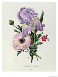 Iris, Anemone and Geranium Giclee Print by Pierre-Joseph Redout&#233;