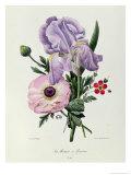 Iris, Anemone and Geranium Giclee Print by Pierre-Joseph Redouté