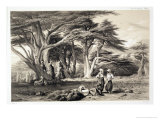 The Cedars of Lebanon Giclee Print by Prosper Georges Antoine Marilhat