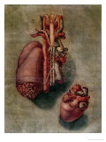 The Heart, Plate from Anatomy of the Visceras Giclee Print by Arnauld Eloi Gautier D'agoty