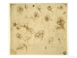 Study of Flowers Giclee Print by Leonardo da Vinci 
