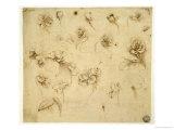 Study of Flowers Giclee Print by  Leonardo da Vinci