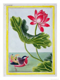 Chinese Red Water Lily, Volume I Giclee Print by Pierre-Joseph Buchoz