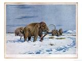Troop of Mammoths in the Ice Age Giclee Print by Wilhelm Kuhnert