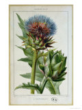 Artichoke, Botanical Plate Giclee Print by Marguerite Buret
