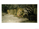 Lion Reclining in a Landscape Giclee Print by Wilhelm Kuhnert