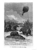 "The Hippopotamus, Illustration from ""Five Weeks in a Balloon"" by Jules Verne Paris, Hetzel Giclee Print by Édouard Riou"