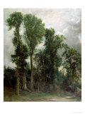 Trees at Hampstead Giclee Print by John Constable