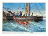 The Giant Squid Caught by the Alecton off the Coast of Tenerife, 30th November 1861 Giclee Print by E. Rodolphe