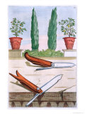 "Gardening Knife, from ""Hesperides"" by Giovanni Battista Ferrari Giclee Print by Filippo Gagliardi"